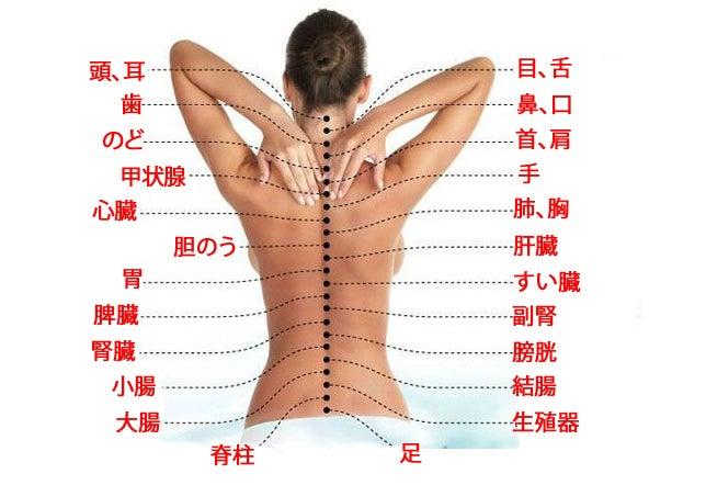 脊柱と内臓との間のつながりとは?