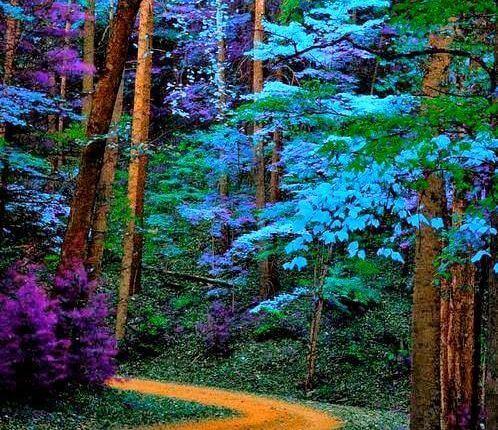 bosque-de-colores