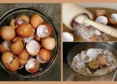 1-eggshells