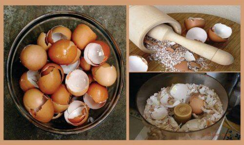 卵の殻を使った自然療法6選