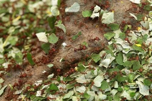 controla-los-insectos-500x334