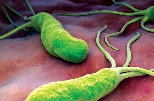 知っておきたい/ピロリ菌感染症の症状と治療法
