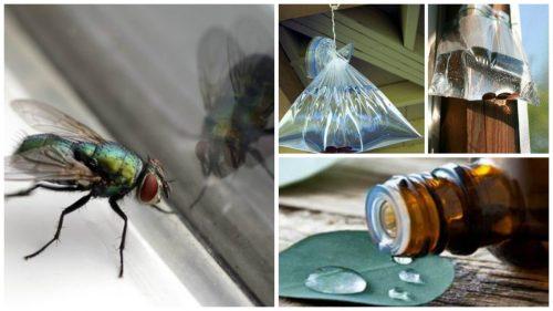 家にあるもので簡単にハエを退治する7つの方法