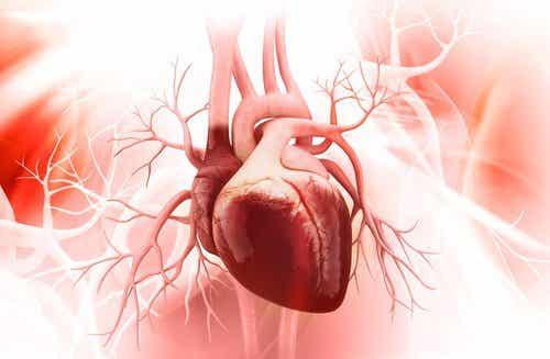 心臓の健康のために大切な3つのこと