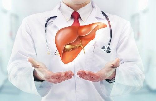 肝臓を強化する重要性