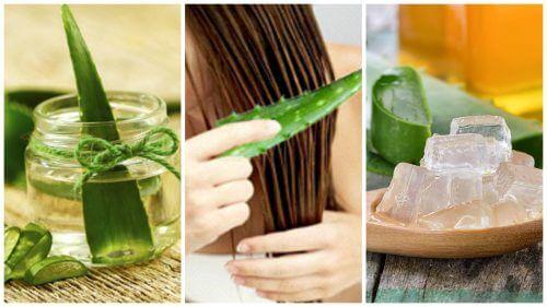 アロエベラで髪を丈夫にする方法5選