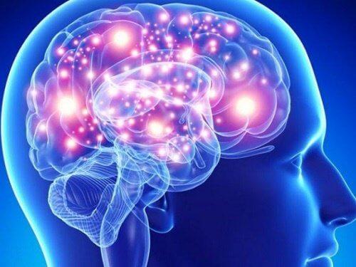 脳の健康に効果的なハーブと香辛料
