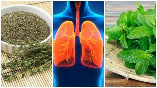 肺の健康を助ける8つのハーブ