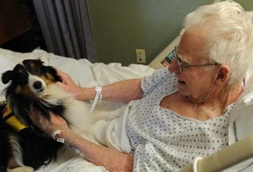 ペットと面会が出来る病院