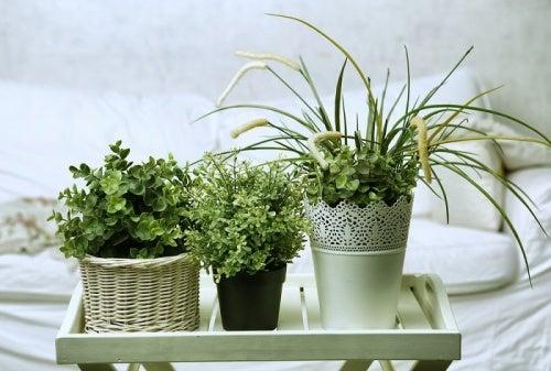 寝室に置きたい6種類の植物