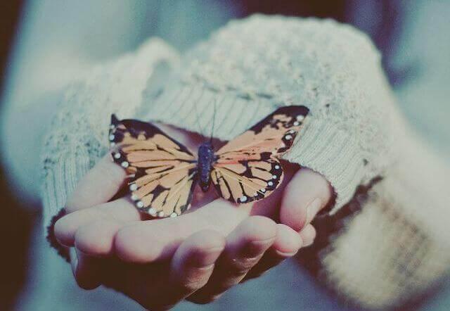 手のひらの上の蝶