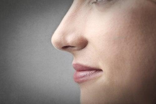 遺伝子の影響:鼻