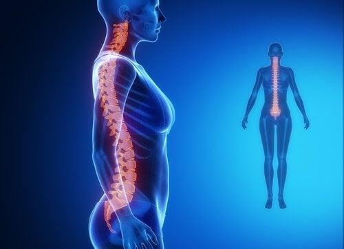 straight spine