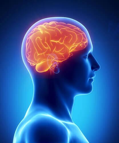 脳の健康維持のために食べるべき8つの食品