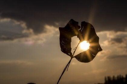 葉の間から刺す日光