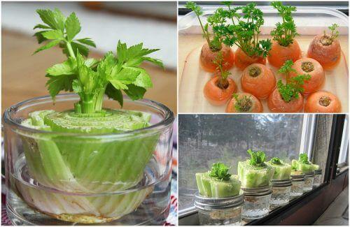 育てるのが簡単な5つの野菜