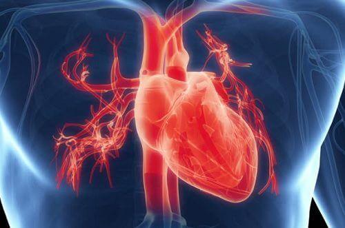 身体の透視図 心臓