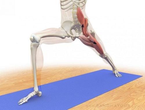 大腰筋エクササイズ時の体の中の様子