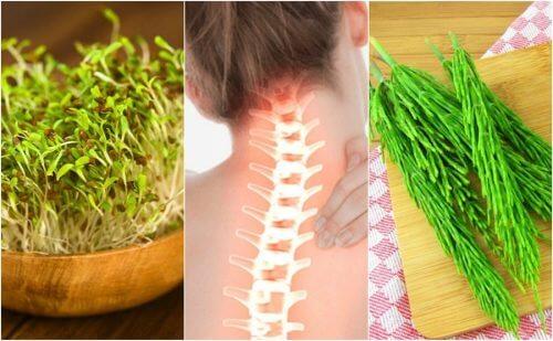 あなたの骨を強くする7つの植物