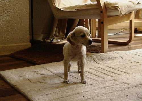 室内に居る犬