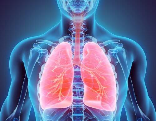 タバコをやめてクリーンな肺を手に入れる方法