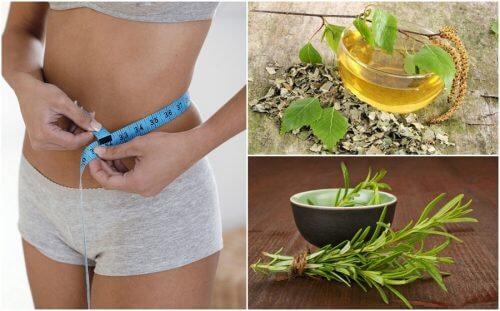 減量に効果的な健康ハーブ8選