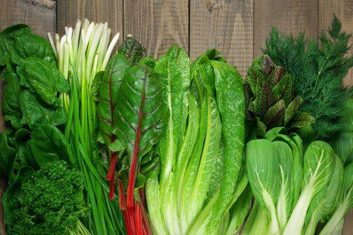 緑の葉野菜