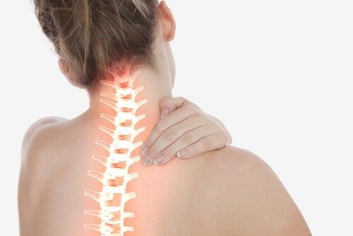 首~背中の骨