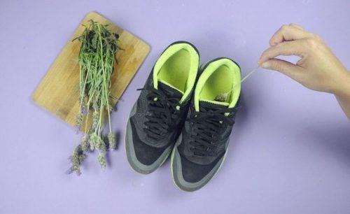 靴とラベンダー