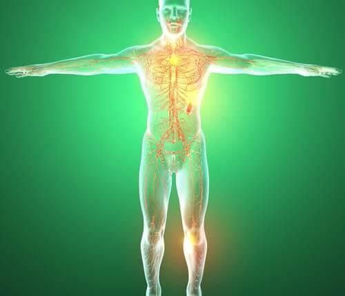 体内のリンパ系
