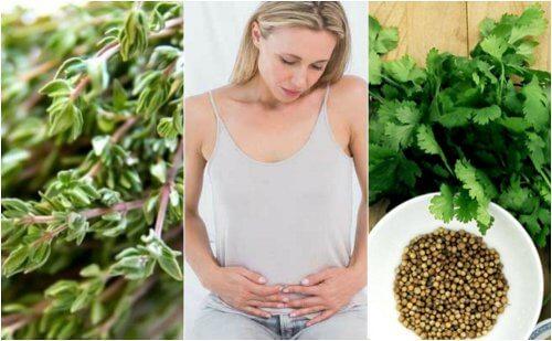 胃腸内にたまったガスを排出するハーブ6選