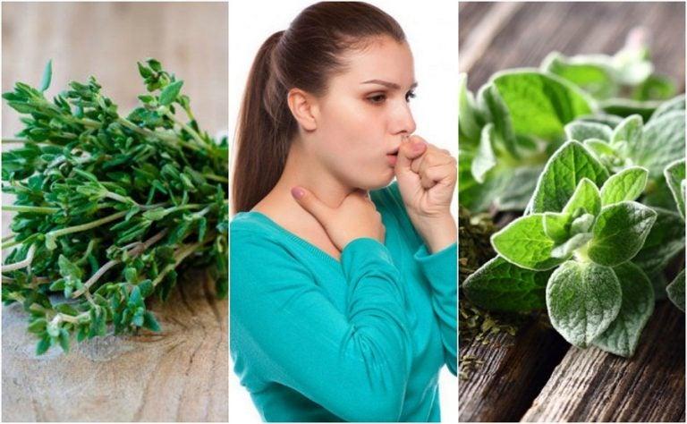 痰のからむ咳を鎮める5種の薬草