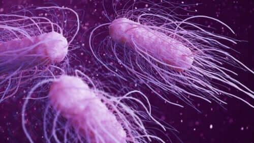 人体に害を及ぼす危険な細菌9種