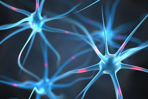 神経細胞のつながり