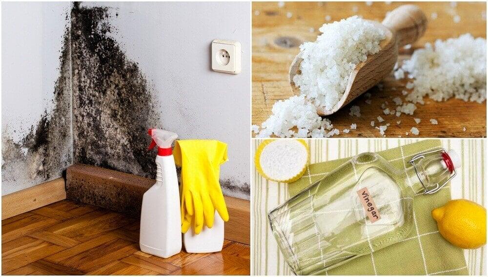家の中の湿気を取り除く5つの方法