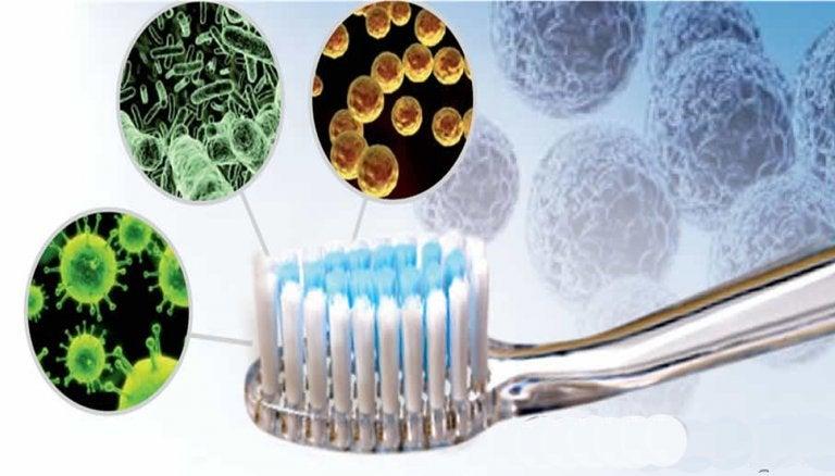 歯ブラシの細菌