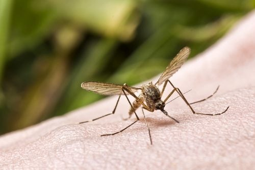 蚊に刺されている