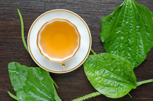 セイヨウオオバコ茶