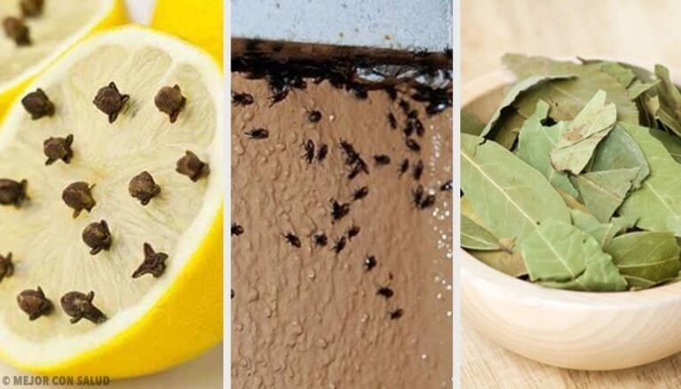 厄介な虫を自然に駆除する方法