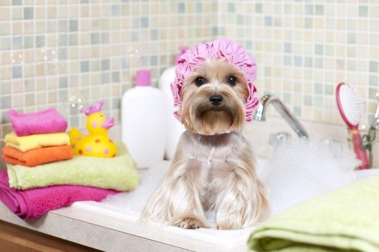 ペットのお風呂