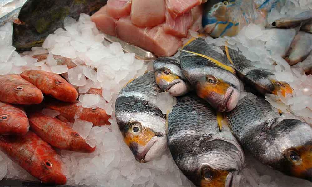 氷の上に並ぶ魚