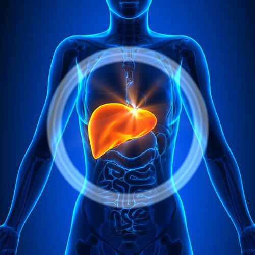 肝臓の機能