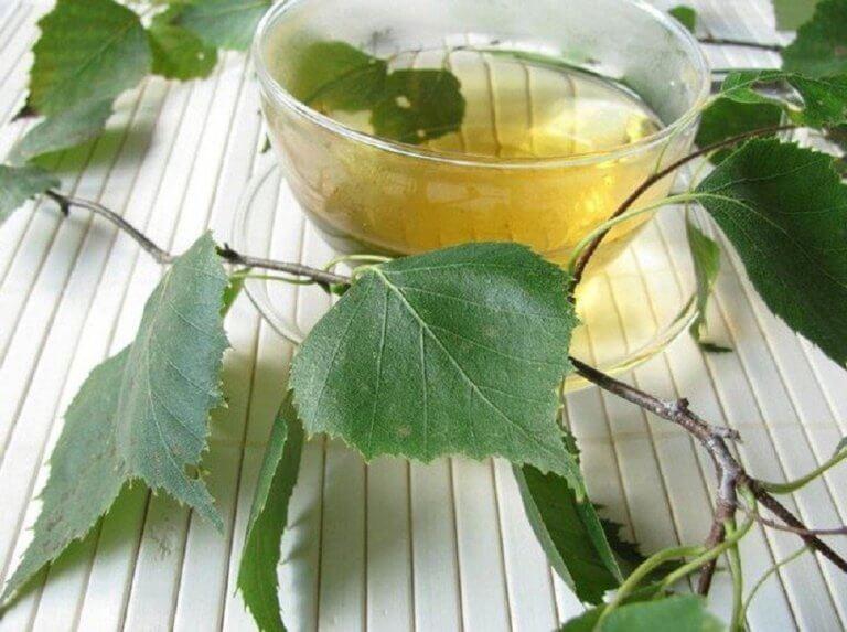 樺の葉 天然利尿薬
