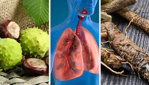 肺を鍛えて呼吸を改善する4つの自然療法