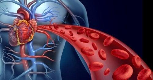 更年期 の血管にもたらす影響