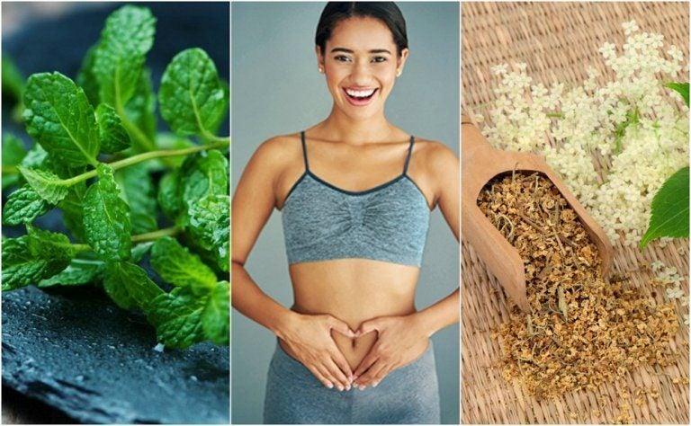 6つの薬用植物で消化をケアしよう