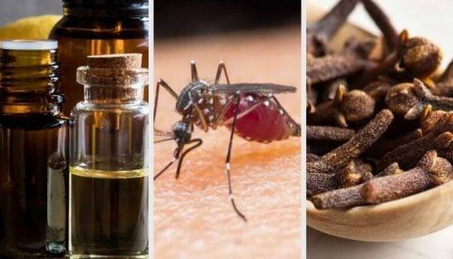 蚊を追い払う香り9選