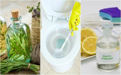 環境に優しい5つのトイレ用洗剤