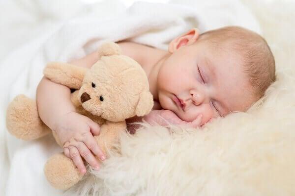 クマを抱いて寝る赤ちゃん