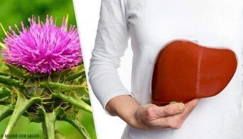 脂肪肝 の自然療法はマリアアザミ